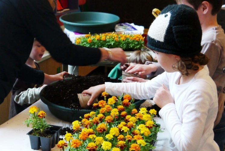 EarthDayAtCMNH PlantingMarigolds